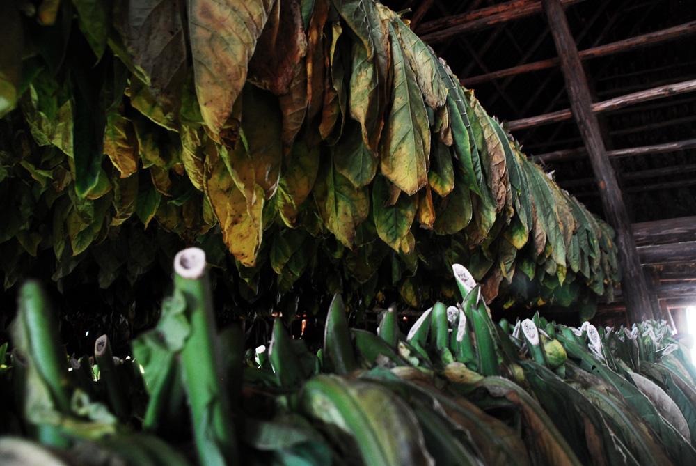 Wachsmann-1-tobaccoman-9web.jpg