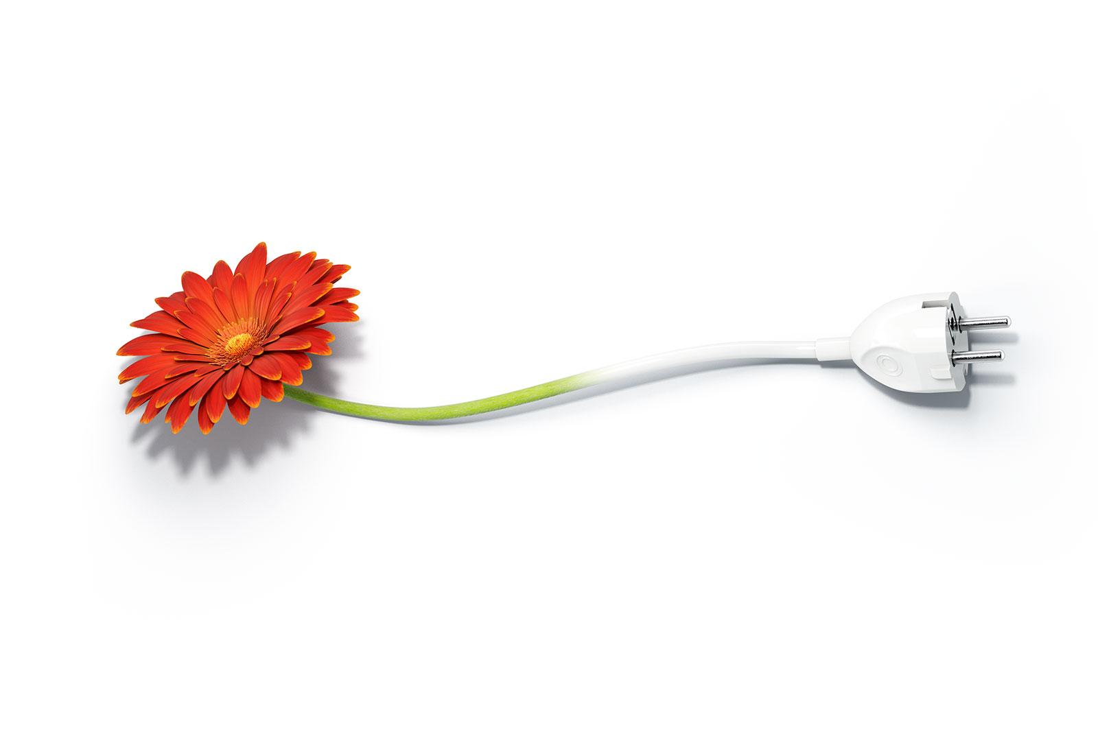 e4business-plug-flower.jpg