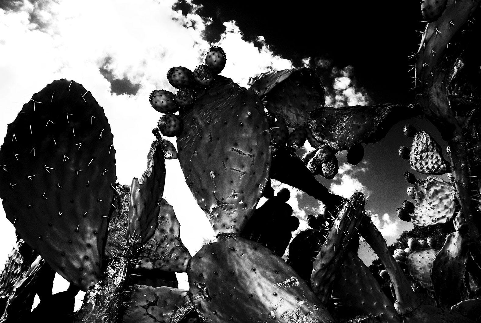 CVW_0199-kaktusSardinien_55x37.jpg